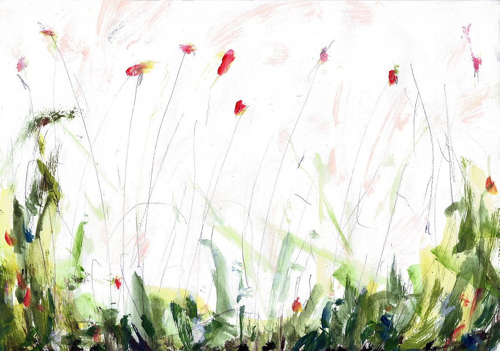 bloemenveld-3.jpg
